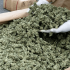drug bust nets 1000 pounds of marijuana worth millions