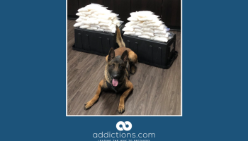 Rookie K-9 finds 60 pounds of meth in California