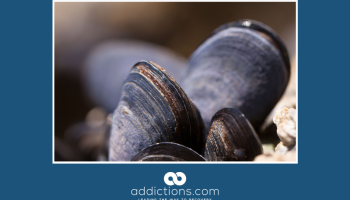 Seattle mussels found to contain trace amounts of Oxycodone