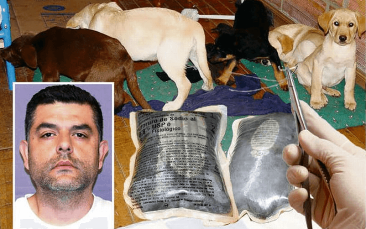 Vet who implanted heroin into puppies extradited to USA from Spain