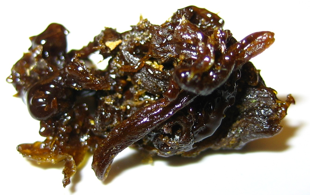 bho hash how to make